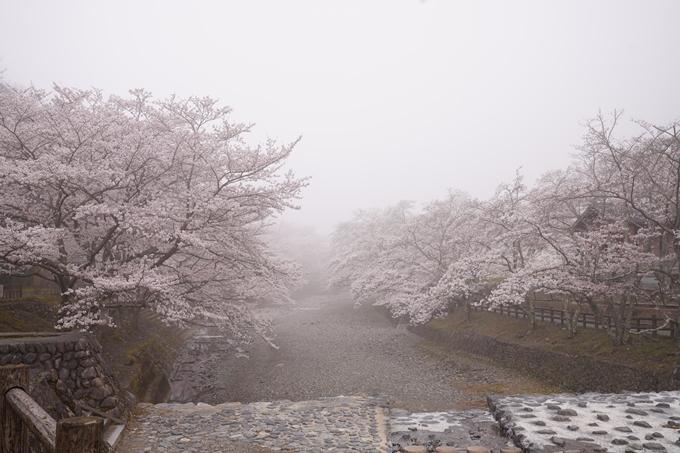桜_2021_27 七谷川 No5