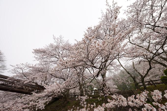 桜_2021_27 七谷川 No10