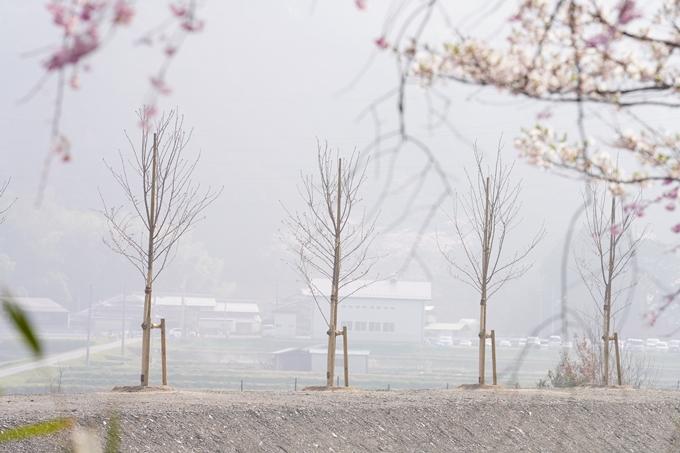 桜_2021_27 七谷川 No24