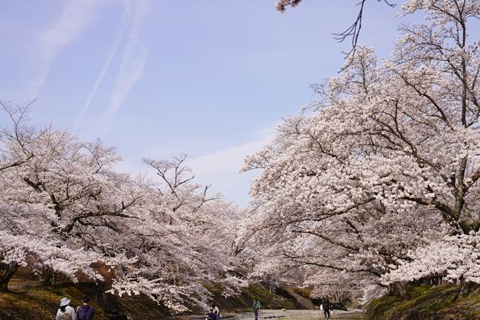 桜_2021_27 七谷川 No35