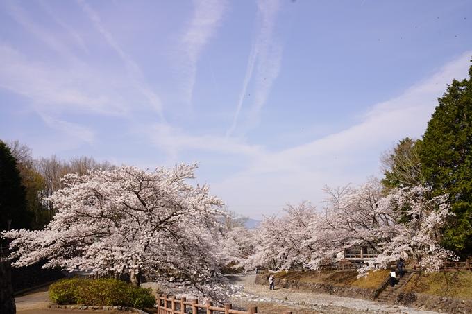 桜_2021_27 七谷川 No37