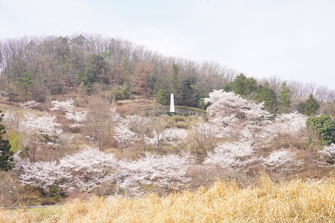 桜_2021_28 南郷公園 No2