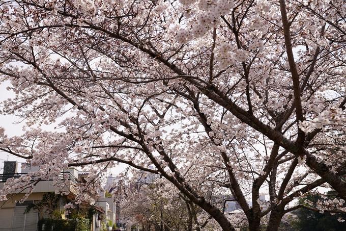 桜_2021_28 南郷公園 No3