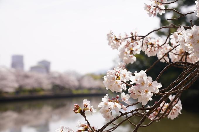 桜_2021_28 南郷公園 No4