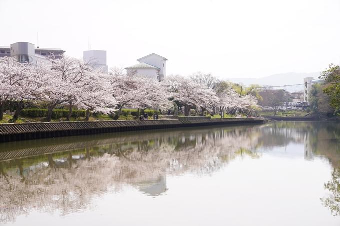 桜_2021_28 南郷公園 No5