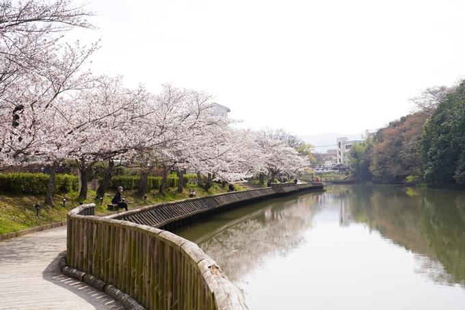 桜_2021_28 南郷公園 No6