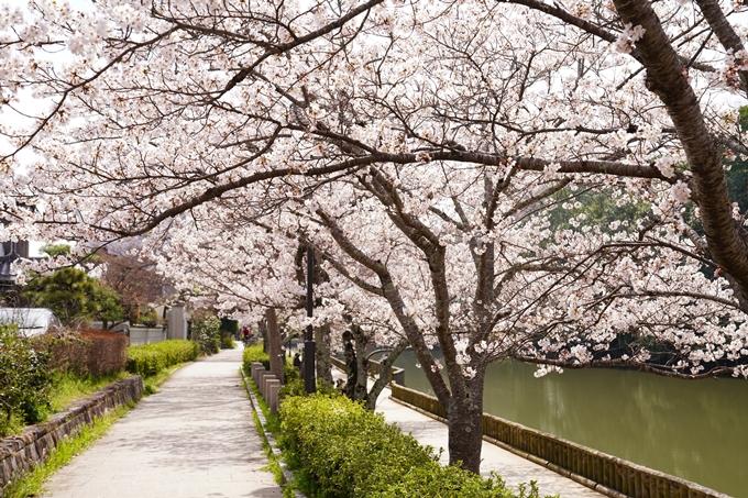 桜_2021_28 南郷公園 No7