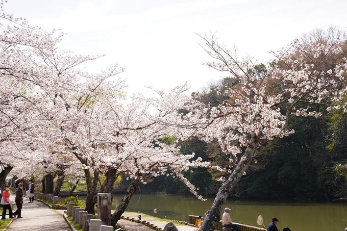 桜_2021_28 南郷公園 No8