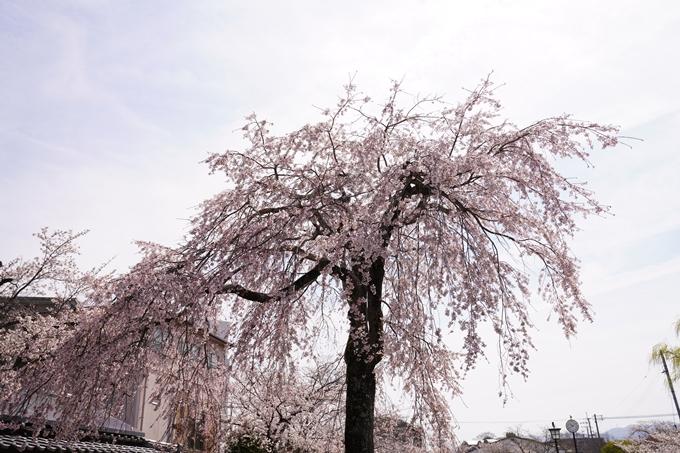 桜_2021_28 南郷公園 No9