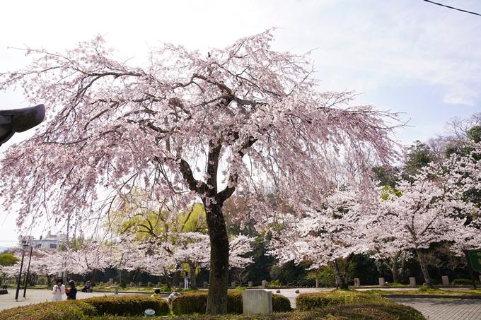 桜_2021_28 南郷公園 No10