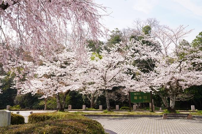 桜_2021_28 南郷公園 No11