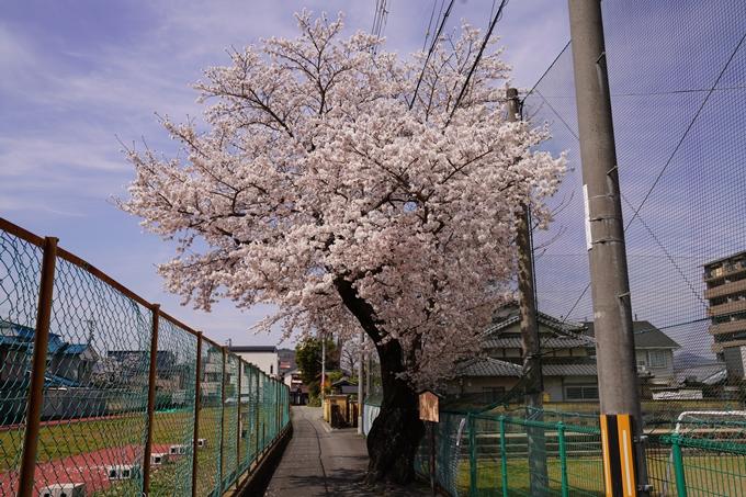 桜_2021_28 南郷公園 No15