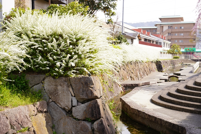 桜_2021_28 南郷公園 No16