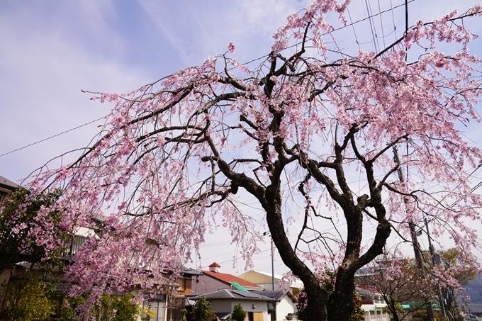 桜_2021_28 南郷公園 No17