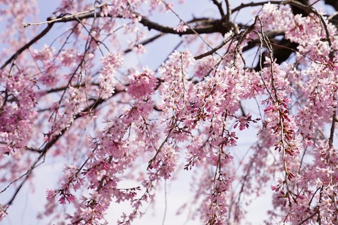 桜_2021_28 南郷公園 No18