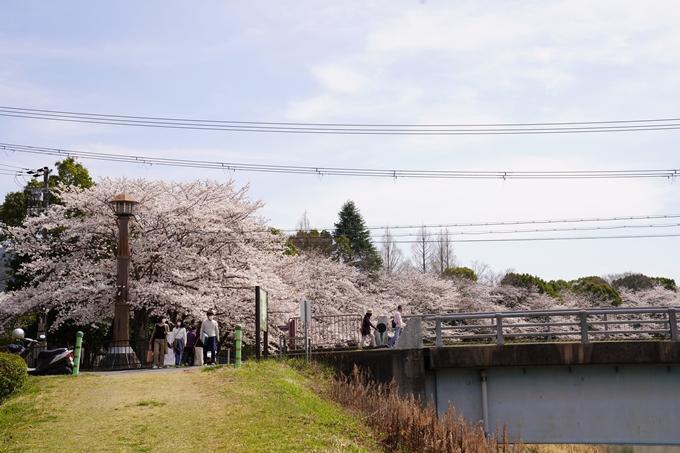 桜_2021_31 亀岡運動公園 No8