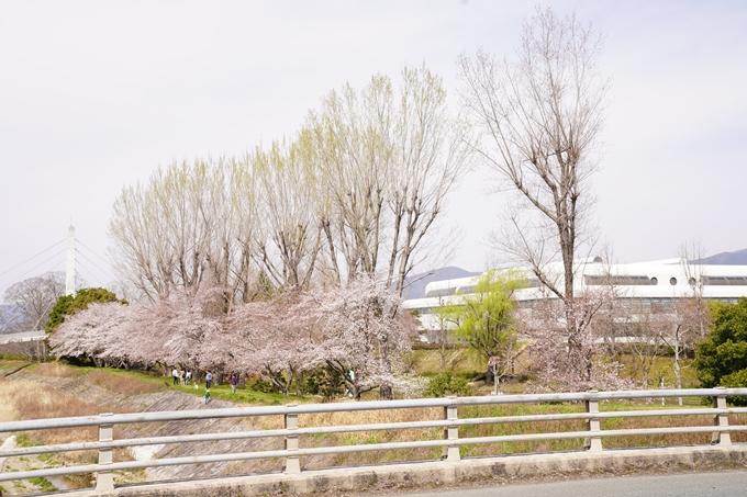 桜_2021_31 亀岡運動公園 No6