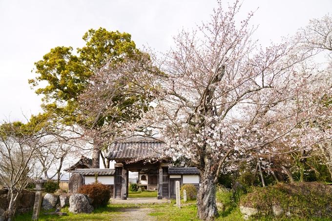 桜_2021_34 丹波国分寺跡 No2