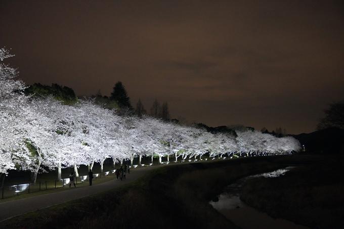 桜_2021_37 亀岡運動公園_ライトアップ No9