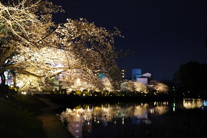 桜_2021_38 南郷公園_ライトアップ No2