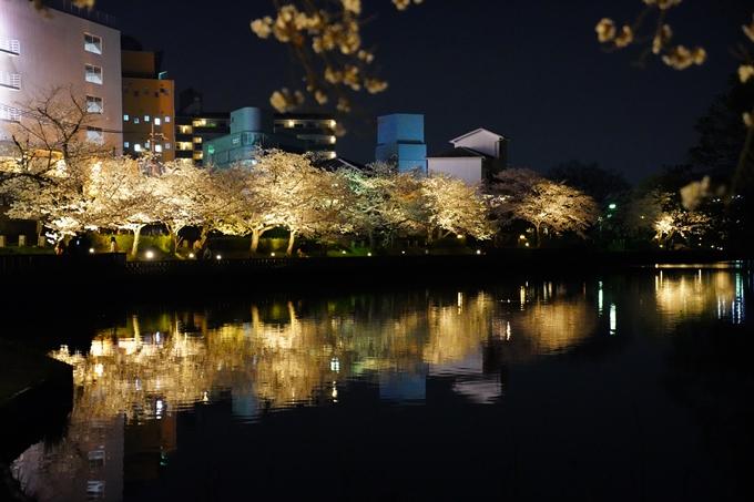 桜_2021_38 南郷公園_ライトアップ No3