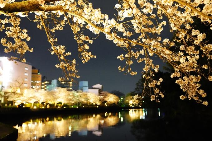 桜_2021_38 南郷公園_ライトアップ No4
