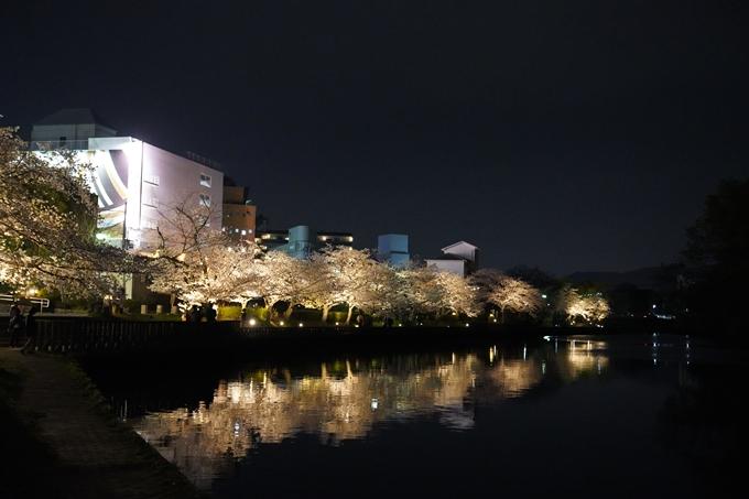 桜_2021_38 南郷公園_ライトアップ No5