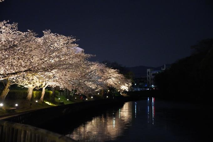 桜_2021_38 南郷公園_ライトアップ No6