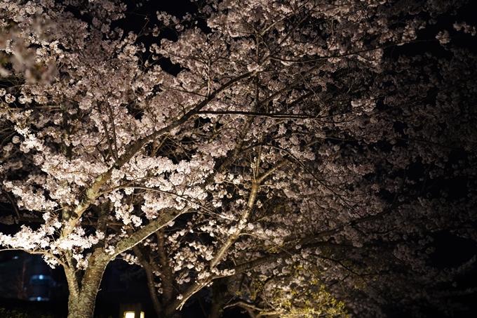 桜_2021_38 南郷公園_ライトアップ No7