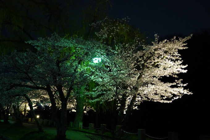 桜_2021_38 南郷公園_ライトアップ No8