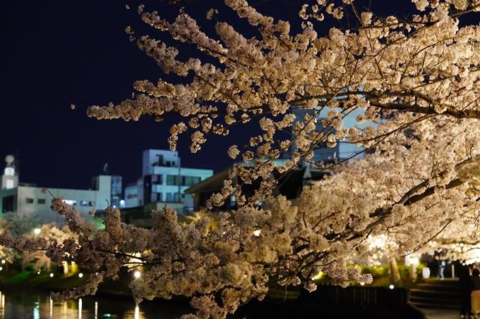 桜_2021_38 南郷公園_ライトアップ No14