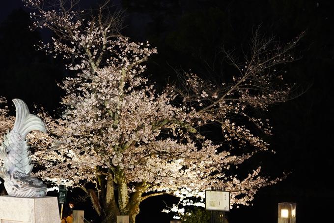 桜_2021_38 南郷公園_ライトアップ No16