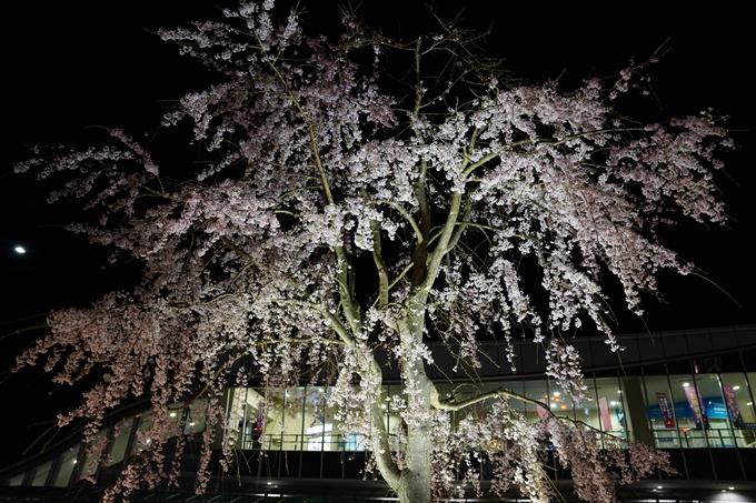 桜_2021_38 南郷公園_ライトアップ No17