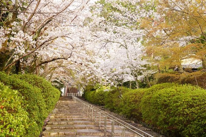 桜_2021_40 宗忠神社 No7