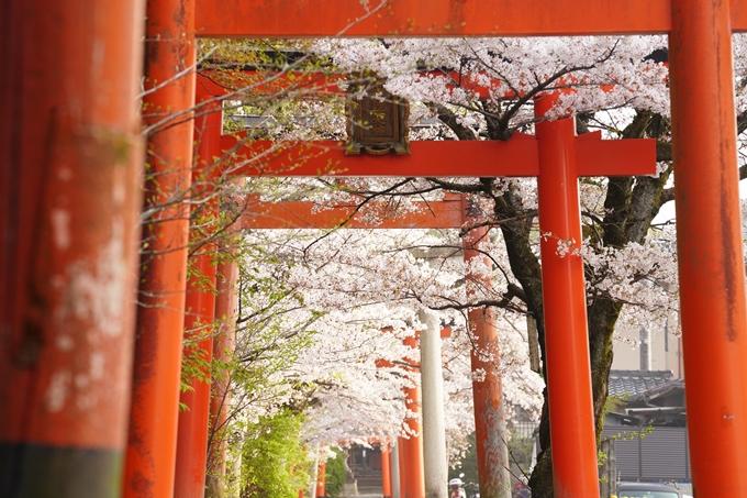 桜_2021_41 竹中稲荷神社 No3