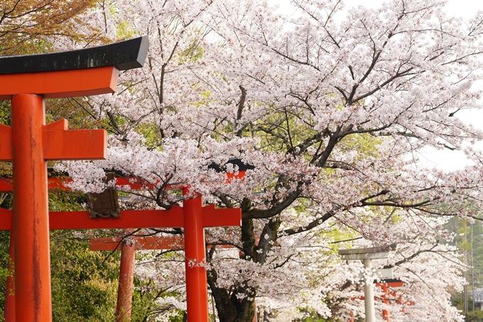 桜_2021_41 竹中稲荷神社 No5