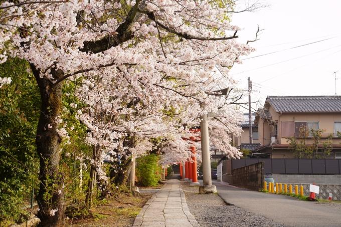 桜_2021_41 竹中稲荷神社 No7