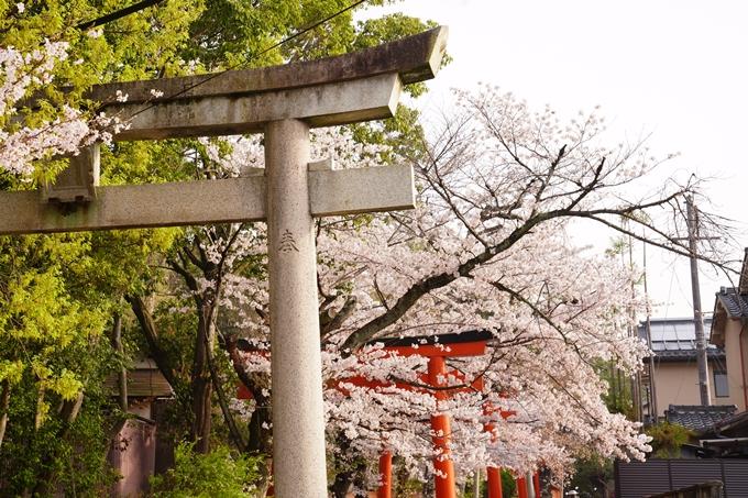 桜_2021_41 竹中稲荷神社 No8