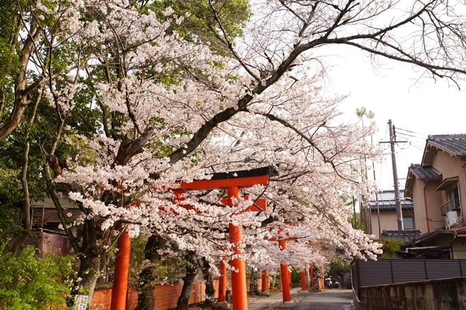 桜_2021_41 竹中稲荷神社 No9