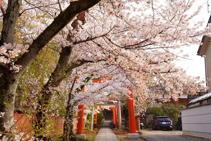 桜_2021_41 竹中稲荷神社 No10