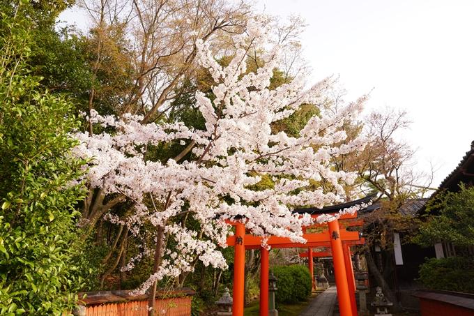 桜_2021_41 竹中稲荷神社 No11
