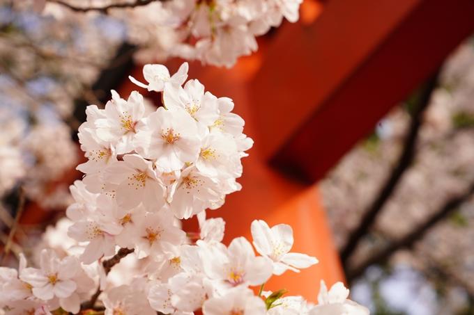 桜_2021_41 竹中稲荷神社 No13