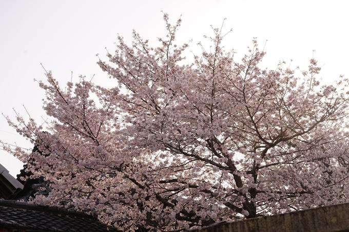 桜_2021_39 真如堂 No12
