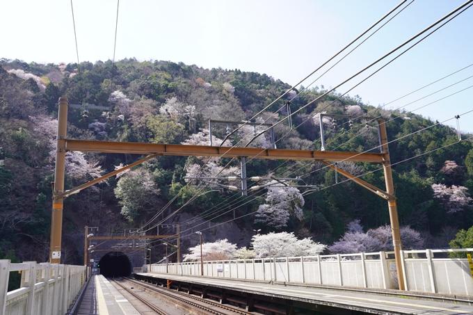 桜_2021_43 JR保津峡駅 No16