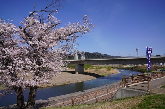 桜_2021_44 保津川遊船 No3