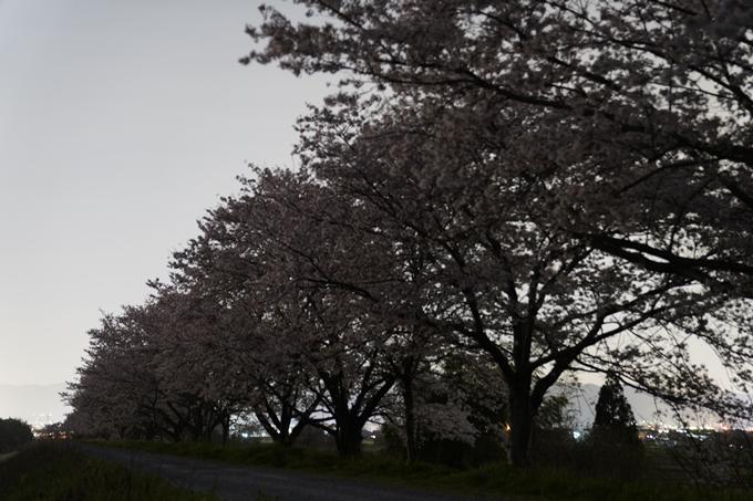 桜_2021_50 月明かり No3