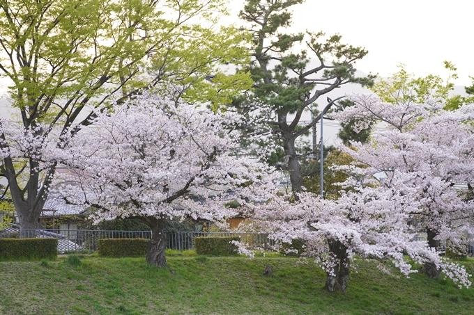 桜_2021_51 半木の道 No12