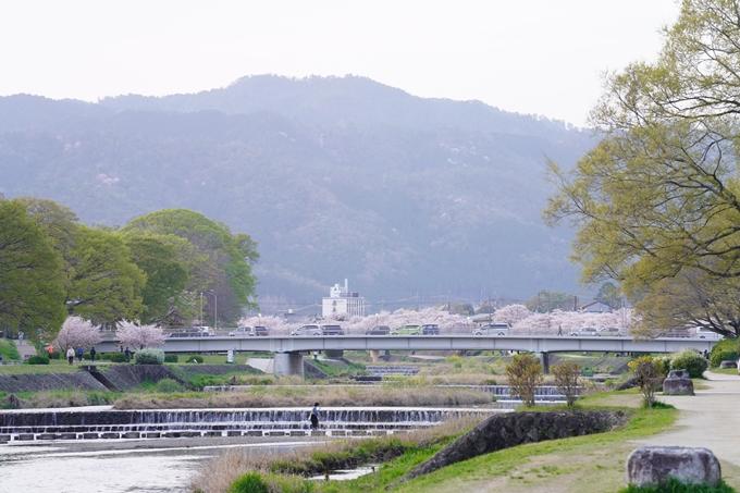 桜_2021_51 半木の道 No14