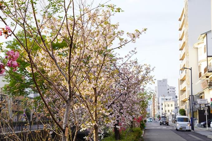 桜_2021_52 堀川 No17