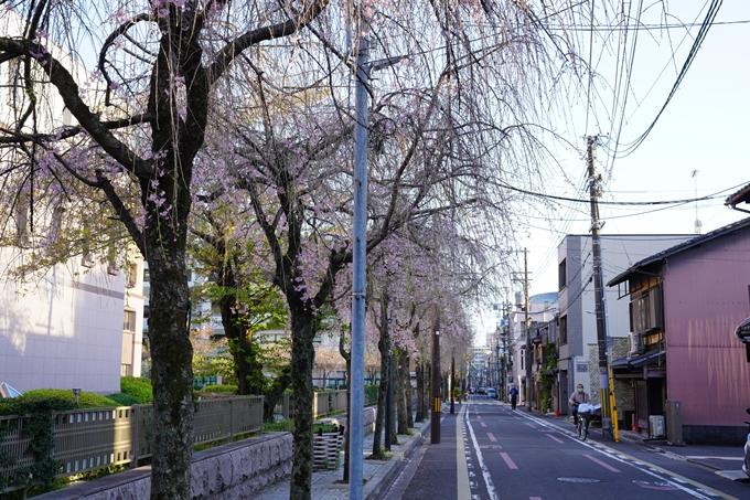 桜_2021_53 京都地方裁判所 No3